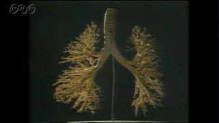 肺のしくみとはたらき