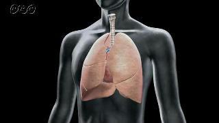 体の中にある肺