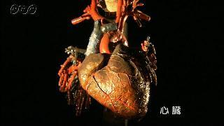 心臓と動脈・静脈