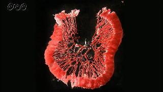 栄養を運ぶ血液