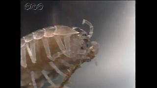 落ち葉を食べるダンゴムシ