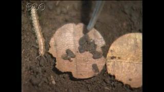 土を作る虫たちのふん
