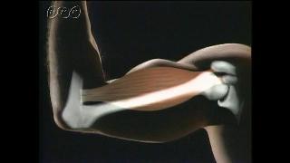 骨と筋肉-中学