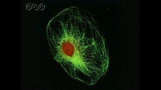 細胞の中のタンパク分子の動き-中学