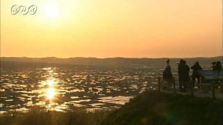 サムネイル画像:砺波平野 田植えのころの散居村
