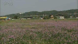 サムネイル画像:富山市 休耕田のレンゲ畑