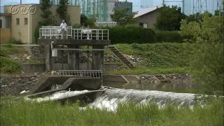サムネイル画像:富山市熊野川 アユの遡上