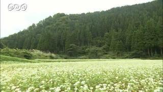 サムネイル画像:利賀村 そば畑