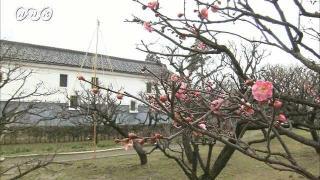 サムネイル画像:富山市 内山邸の梅の花