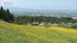 サムネイル画像:南砺市 閑乗寺公園のタンポポ