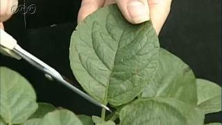 植物の体のはたらきと光合成