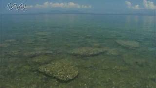 水俣湾の再生