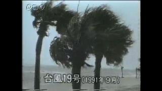 台風19号(1991年)のひ害