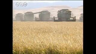 アメリカの大規模稲作