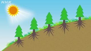 環境にやさしい林業~間伐~