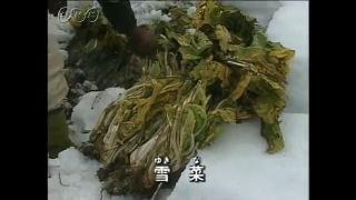 雪の役立て方 野菜の栽培