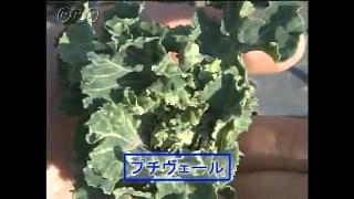 高栄養化野菜